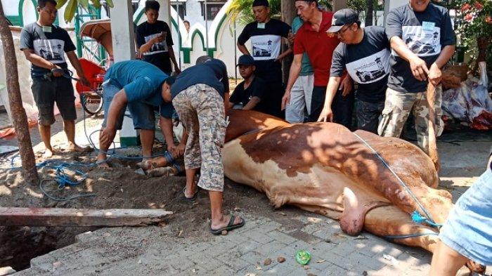 Idul Adha 2020, Kemenag Solo Anjurkan Sembelih Hewan Kurban di RPH Jagalan, Pembagian Daging Diantar