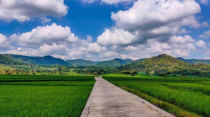 Hijau Sejauh Mata Memandang, Ini Penampakan Pronosutan View di Kulon Progo, Bikin Adem