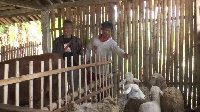 Kambing Untuk Biaya Sekolah Milik Warga Klaten Raib Dicuri, Anak Terancam Tak Kuliah