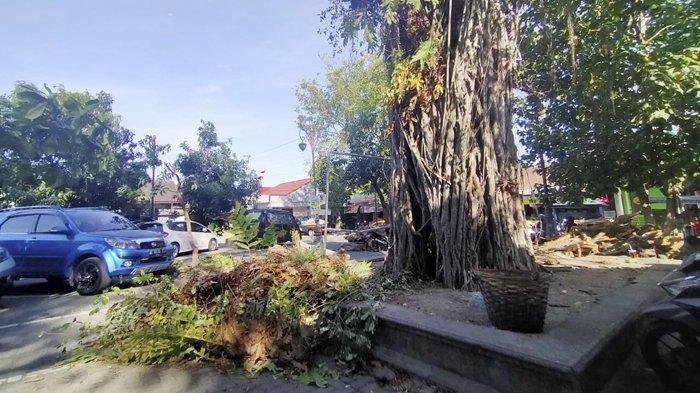 Pohon Beringin di Pasar Depok Manahan Ambruk, Timpa 1 Mobil Carry Merah, Tak Ada Korban Jiwa