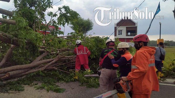 Pohon Tumbang Timpa Truk di Karanganyar, Sopir Selamat, Tapi Sempat Buat Macet Jalan Lingkar Selatan