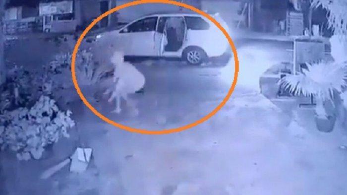 Viral di Klaten, Pakai Mobil Bagus Mencuri Tanaman Jenis Sikas, Aksinya Pun Terekam Jelas CCTV