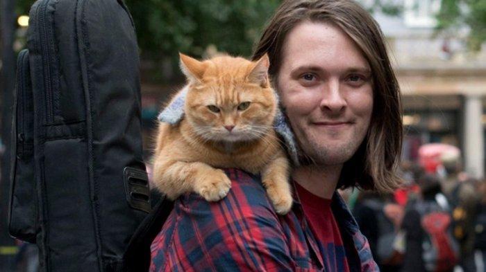 RIP BOB The Cat
