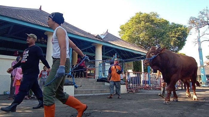 Sapi Kurban Jokowi 1,03 Ton Disembelih, Bisa Hasilkan 900 Kantong Daging yang Diantar ke Rumah Warga