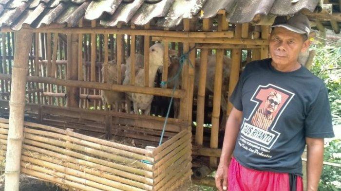 Nasib Satiman di Klaten, Mau Jual 3 Kambing untuk Biaya Anak Masuk Kuliah, Ternyata Dicuri Maling