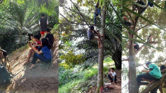 Viral Sejumlah Siswa di Simalungun Panjat Pohon Cari Sinyal untuk Belajar Online, Begini Kondisinya