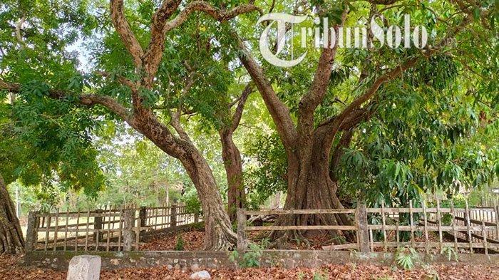 Inilah Situs Sambi Galuh di Sambungmacan, Jadi Tempat Bertemunya Putri Cempo dan Prabu Brawijaya V