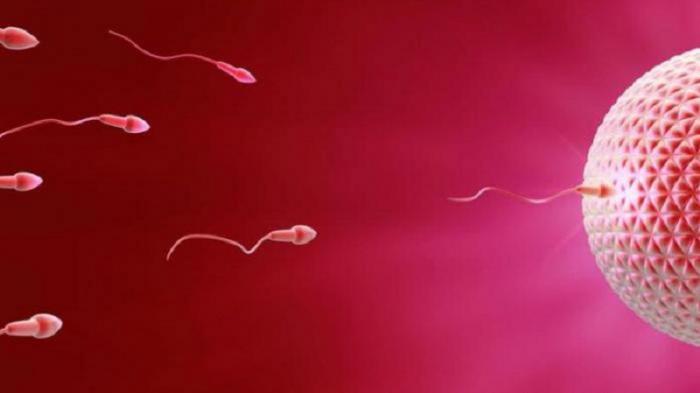 Apakah Sehat Mengeluarkan Sperma Setiap Hari? Simak Penjelasannya
