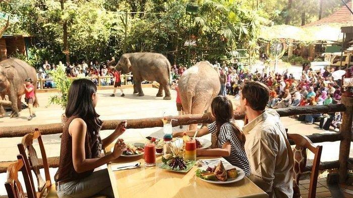 Tak Ada Kunjungan Wisatawan, Satwa di Taman Safari Bogor Ikut Puasa, Makan Dua Hari Sekali