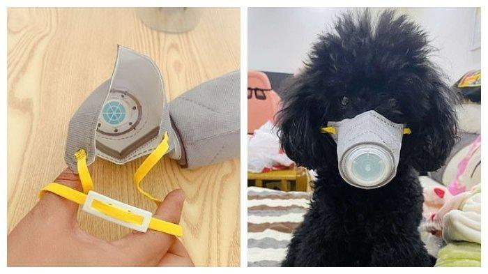 Seekor Anjing di Hongkong Positif Virus Corona, Diduga Tertular dari Pemilik Anjing