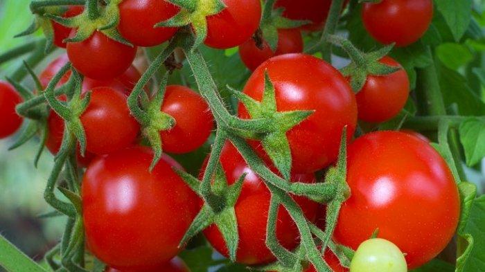 Sederet Sayuran yang Baik Dikonsumsi untuk Kesehatan Otak, Mulai Tomat hingga Bawang Bombai