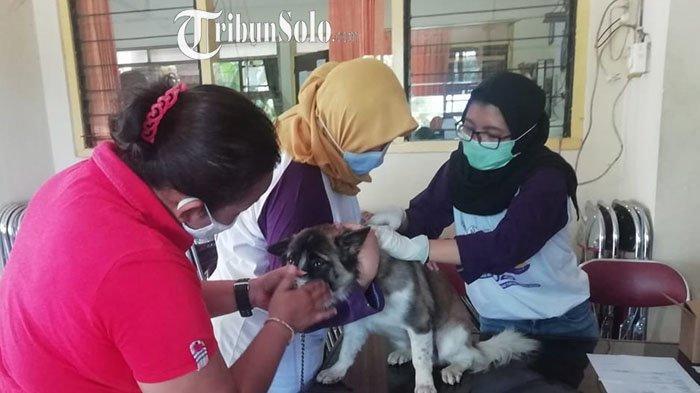Wonogiri Buka Vaksinasi Rabies Gratis untuk Hewan: Sasar Kera, Anjing, dan Kucing
