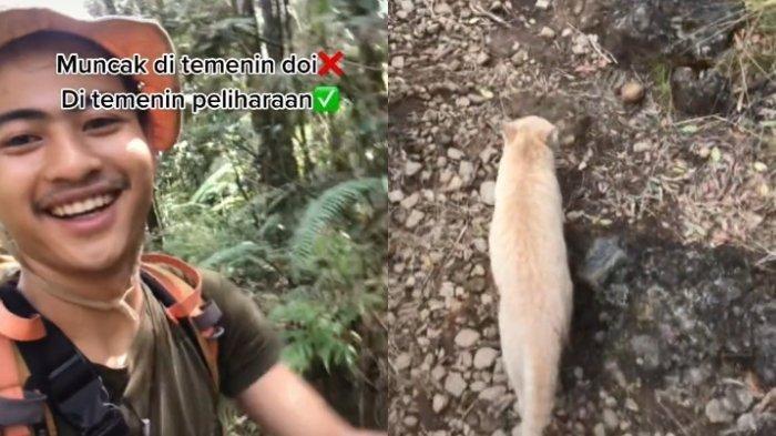 Viral Video Pemuda Mendaki Gunung Ditemani Kucing Oren, Terungkap Kisah Lucu di Baliknya