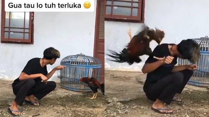 Inilah Sosok di Balik Video Pemuda Dipatuk Ayam saat Curhat Ditinggal Kekasih, Begini Kisahnya