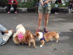 anjing-di-cfd-solo_20170115_205032.jpg