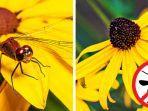 bunga-black-eyed-susan-depositphotoscom-via-bright-side.jpg