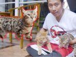 denny-cagur-koleksi-kucing.jpg