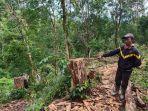 illegal-logging-di-hutan-milik-perhutani-di-perbatasan-wonogiri-sukoharjo-yoss.jpg