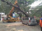 kendaraan-berat-dihadirkan-dalam-evakuasi-pohon-tumbang-dijl-samratulangi_20181107_172901.jpg