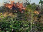 kobaran-api-melahap-lahan-seluas-30-hektar-di-kampung-labanan.jpg