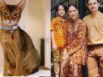 kucing-kesayangan-ashraf.jpg