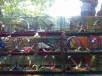 masih-ada-penjual-binatang-di-sunday-market-minggu-2182016_20160821_180734.jpg
