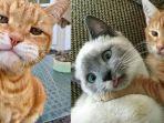 meme-kucing-oren-yang-viral-di-instagram.jpg