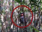 motor-terbang-pohon-bambu.jpg