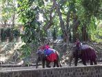 naik-gajah-di-tstj-solo_20170630_164812.jpg