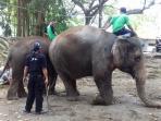 pawang-gajah-mahout-gajah-jurug_20160422_155351.jpg