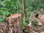 pembalakan-liar-di-hutan-milik-perhutani-sukoharjo-yesss.jpg