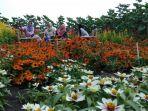 pengunjung-tengah-berswafoto-diantara-hamparan-kebun-bunga-resoinangun-garden-di-bantul_20180521_110212.jpg