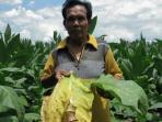 petani-tembakau-di-klaten_20160926_142658.jpg