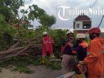pohon-tumbang-terjadi-di-jalan-lingkar-luar-selatan-kelurahan-lal.jpg