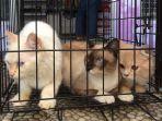 posyandu-kucing-di-petshop-bonnie-tasikmadu_20180506_135754.jpg