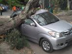 sebuah-mobil-ringsek-tertimpa-pohon-di-jl-samratulangi-selatan-garden-resto-halo-solo_20181107_172653.jpg