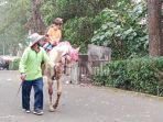 sewa-kuda-di-tawangmangu.jpg