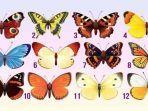 tes-kepribadian-pilih-kupu-kupu-favoritmu.jpg