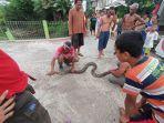 ular-piton-di-karanganyar.jpg