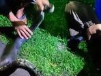 ular-piton-polokarto-sukoharjo.jpg