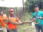 ular-yang-ditemukan-di-salah-satu-sungai-di-mojosongo-pada-selasa-2322021-istimewa.jpg