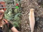 video-seorang-pemuda-mendaki-gunung-ditemani-kucing-oren-viral-di-media-sosial.jpg