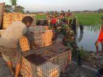 warga-membantu-evakuasi-truk-bermuatan-telur-55-ton-yang-nyungsep-ke-area-per.jpg