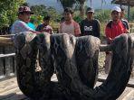 warga-temukan-ular-sepanjang-7-meter_20180722_135637.jpg