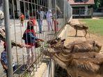wisatawan-memberi-makan-rusa-di-taman-balekambang-di.jpg