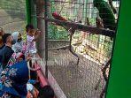 wisatawan-menyaksikan-burung-koleksi-taman-satwa-taru-jurug.jpg