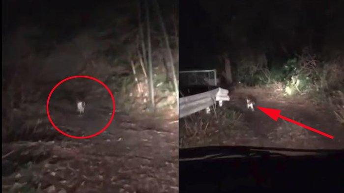 Viral! Pria Tersesat di Hutan Saat Malam Hari, Makhluk Tak Terduga Muncul Tunjukkan Jalan Keluar!