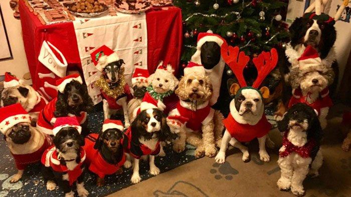 So Sweet! Keluarga di Swedia ini Miliki Tradisi Rayakan Natal Bersama Para Anjing yang Terlantar