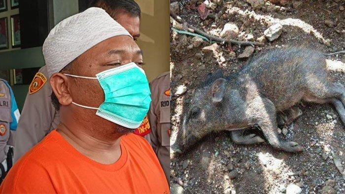 TERBONGKAR Skenario Penyebar Hoax Babi Ngepet, Dibeli Online, Ngarang Cerita Demi Viral: Saya Khilaf