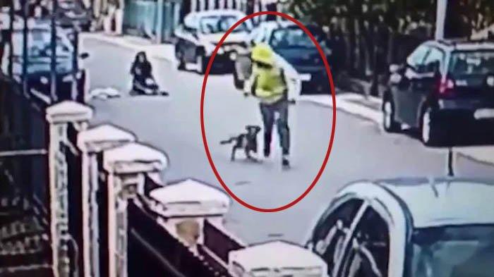 Edan, Aksi Heroik Anjing Selamatkan Wanita dari Perampok Ini Sampai Viral, Lihat Videonya!